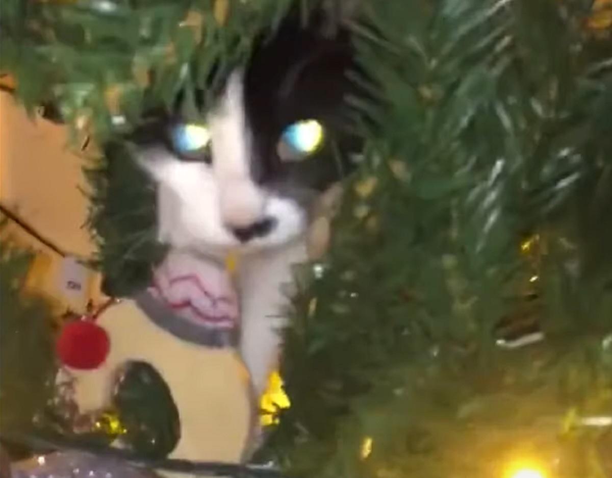 coco gattina beccata
