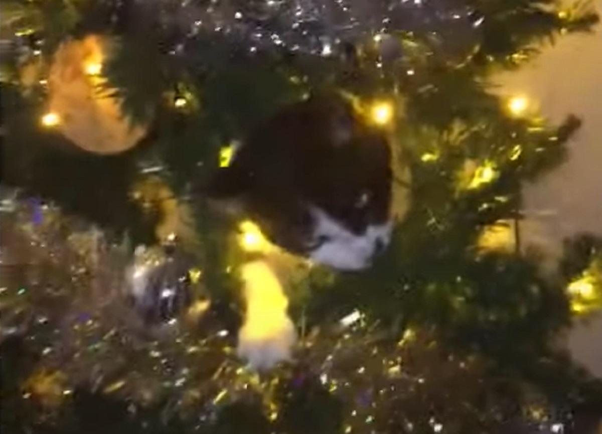 arrampica albero micia