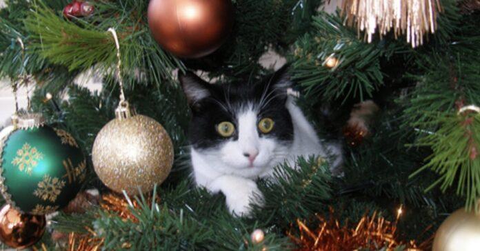 gattina albero natale