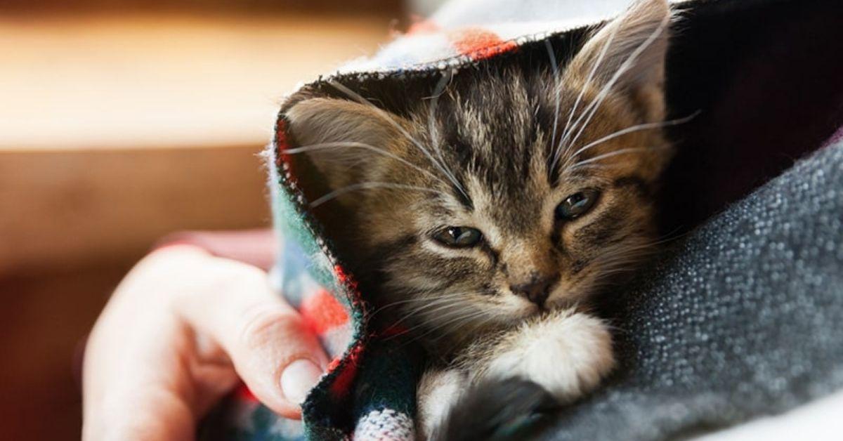 gattini d'inverno