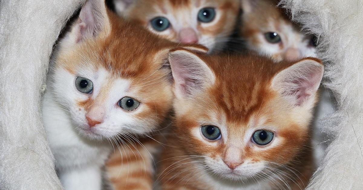 gattini in una cesta