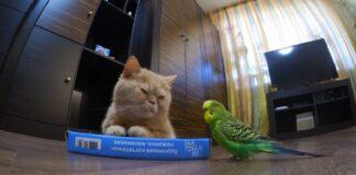 gattino Marsic e il pappagallino