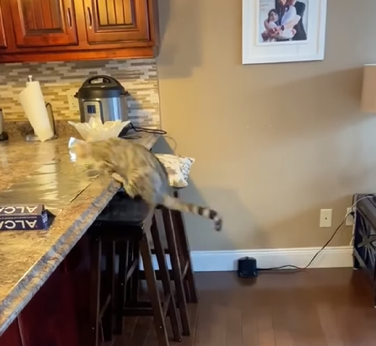 gattino salto sul tavolino