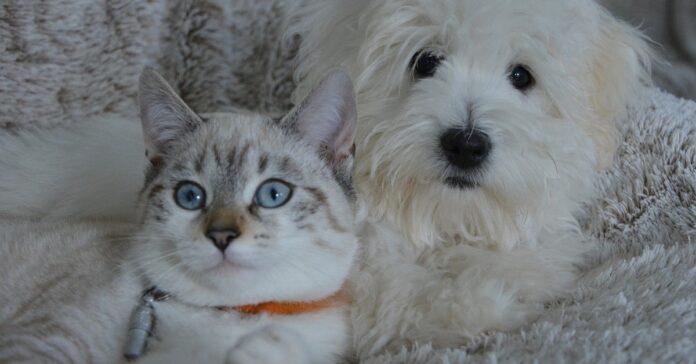gattino coccolone che dorme al calduccio tra i cagnolini