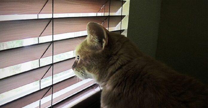 dominio gattino dispetti