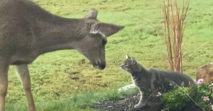 cervo gattino incontro