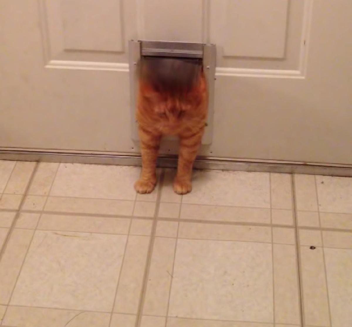 gattino arancione cerca uscire porta