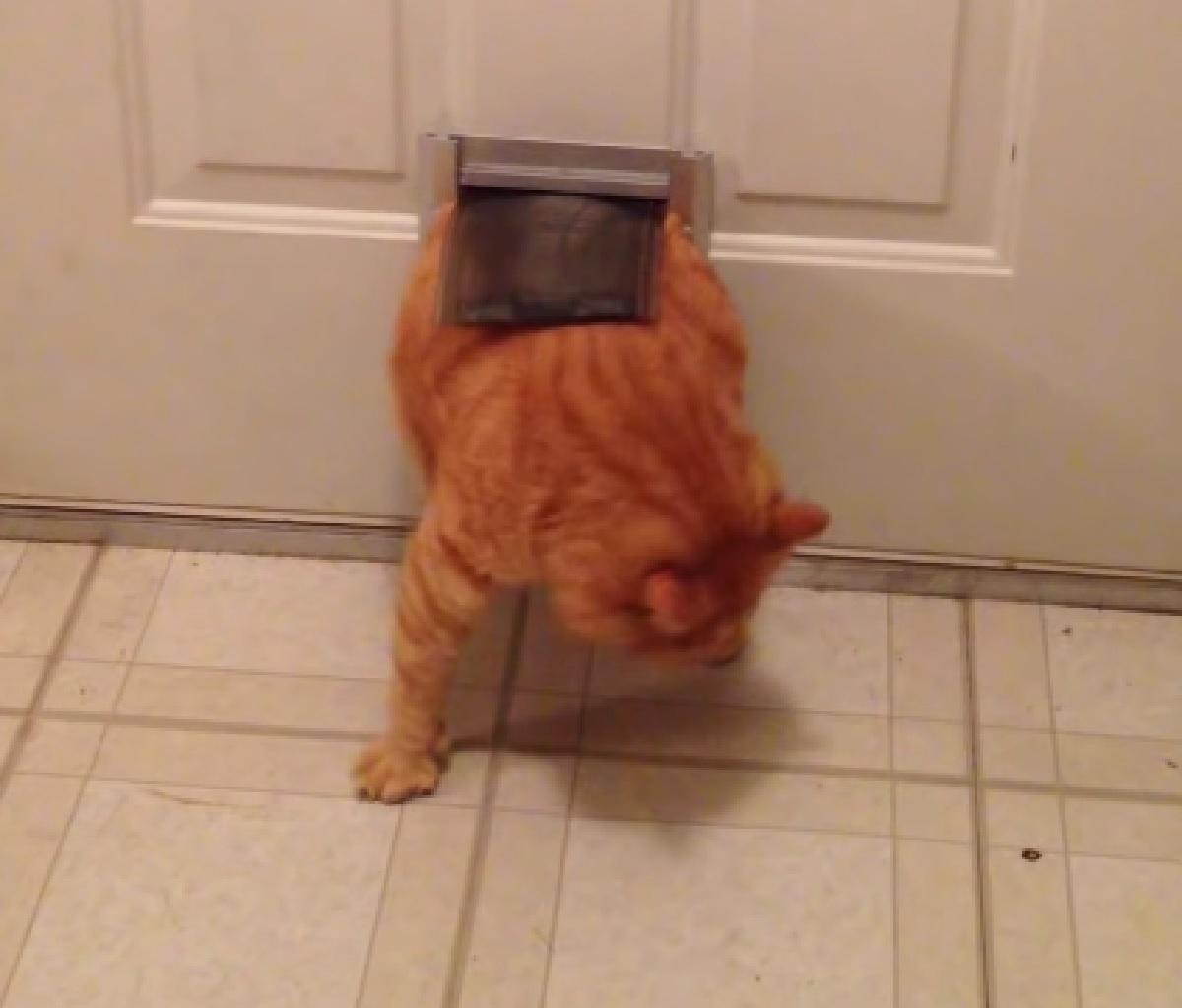 gattino paffuto tentativi falliti iniziali