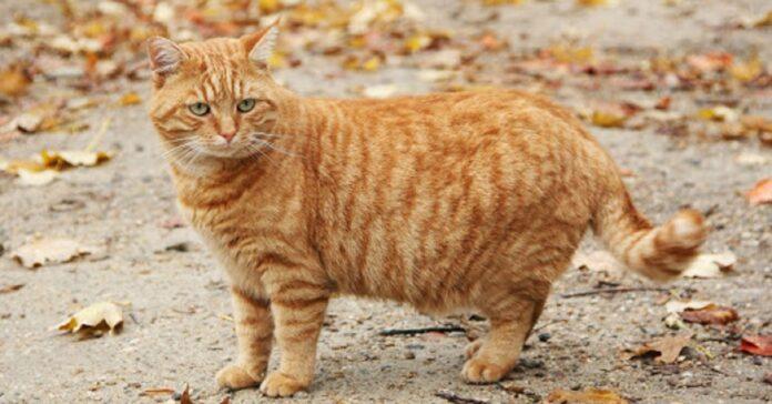 gattino in forma finisce incastrato tentativi video