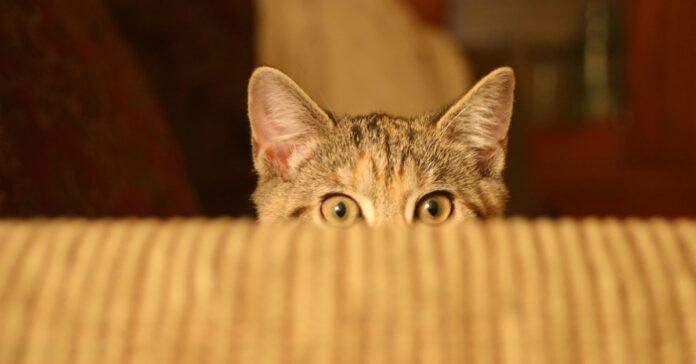 annegare gatto reazione