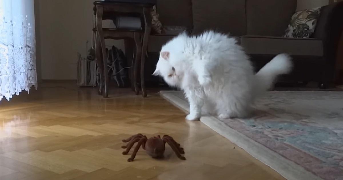micio giocare robot
