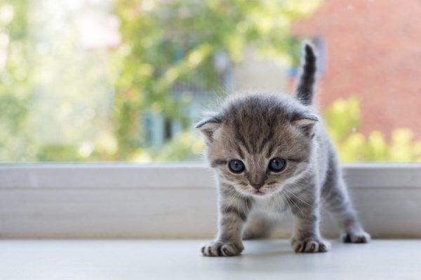 gattino può bere lo spumante