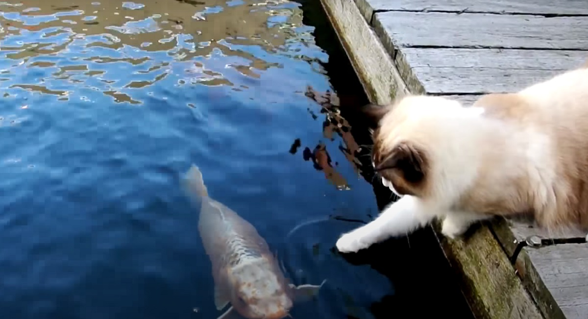 micio saluta pesciolino