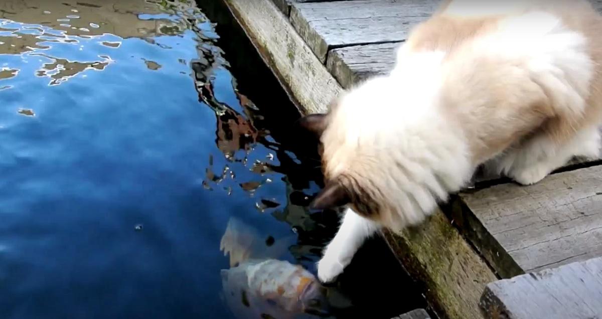 gattino timo amico