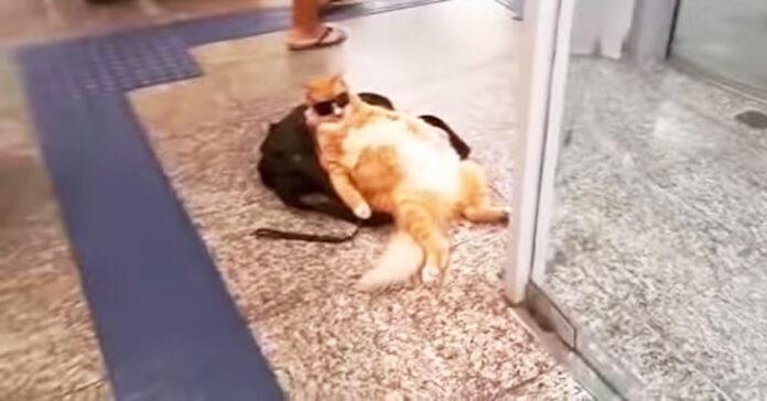 gattino pigro relax