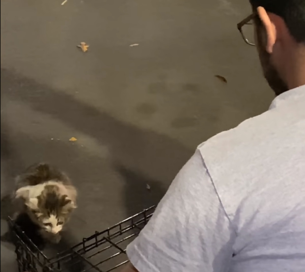 gattino mcdonalds trovato