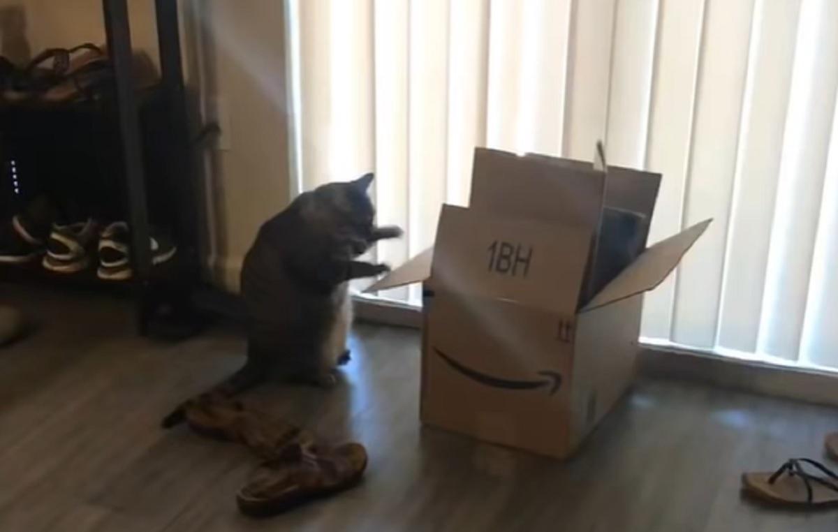 babylove gattina giocare