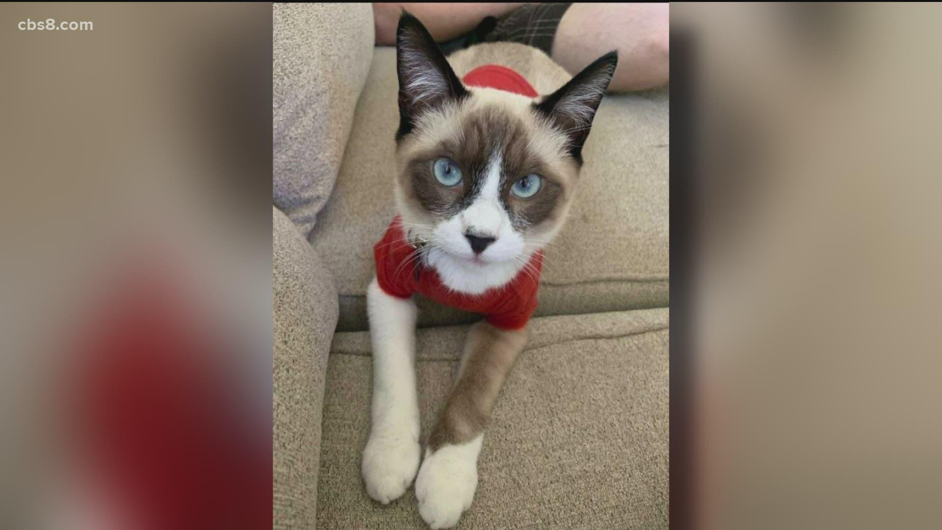 gattino scomparso da casa