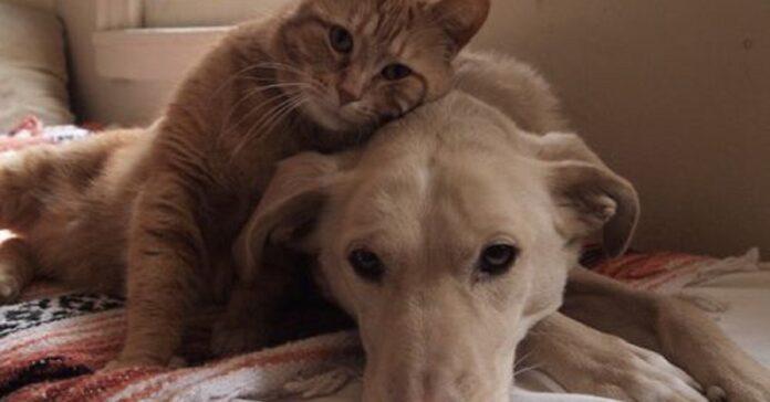gatto consola cane