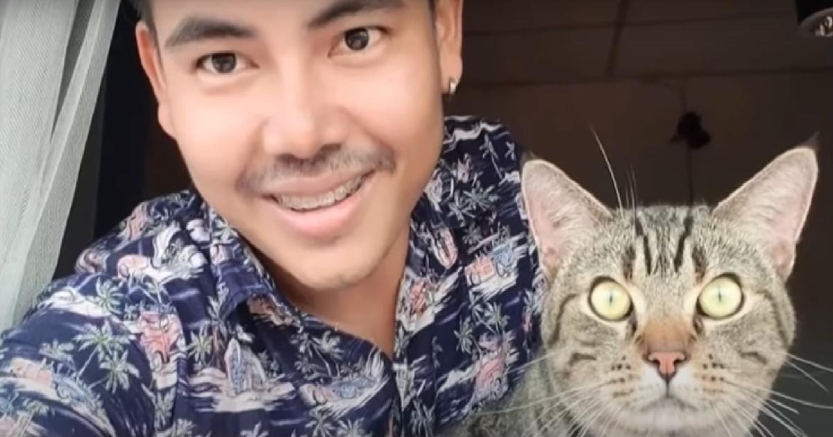 micio gattino achi