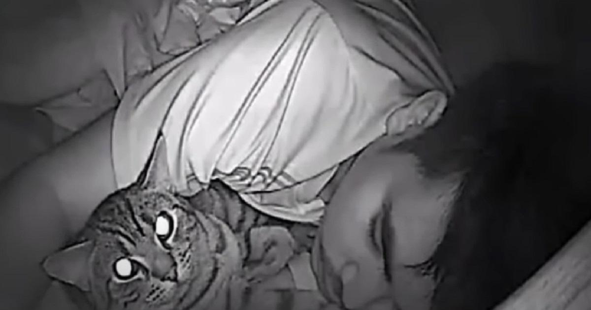 abbraccio gattino letto