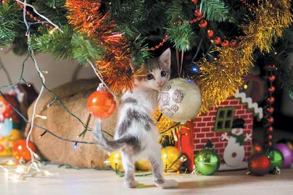 gattino si fionda sul'albero di Natale