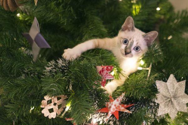 gattino si fionda sull'albero di Natale