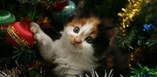 gattino dentro albero di natale