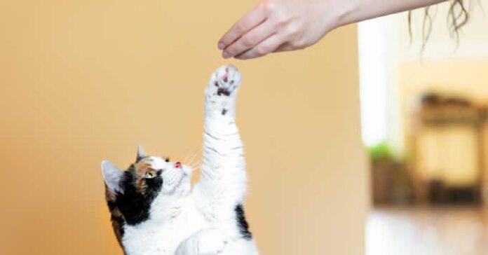 gattino trucchi esecuzione