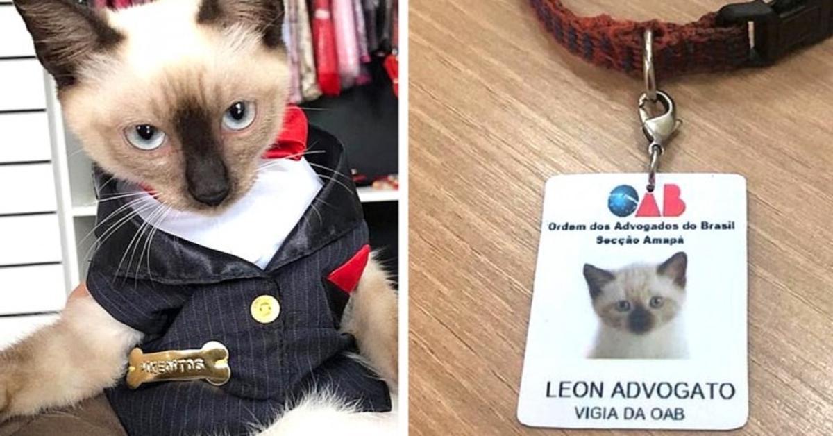 Leon gatto avvocato due foto vestito avvocato