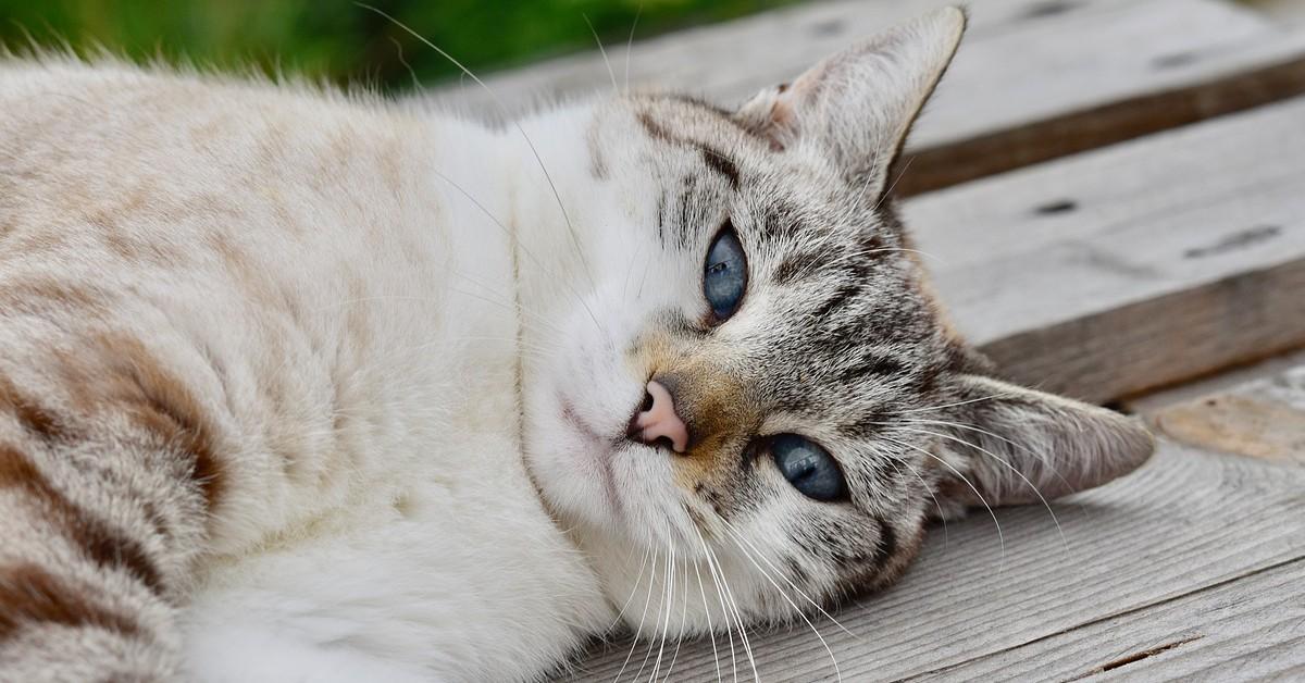 gatto coccole