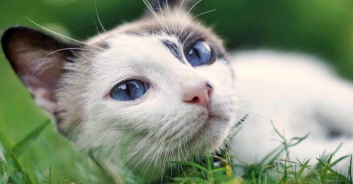 gatto che gioca sull'erba