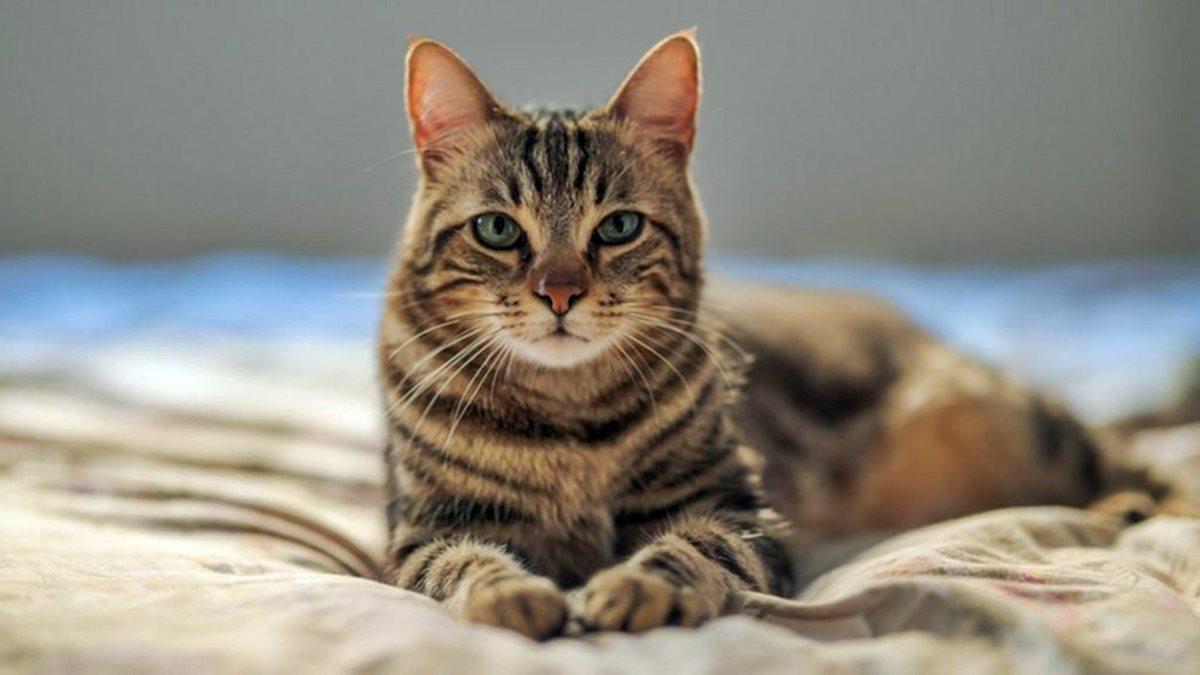 gatto disteso sul letto