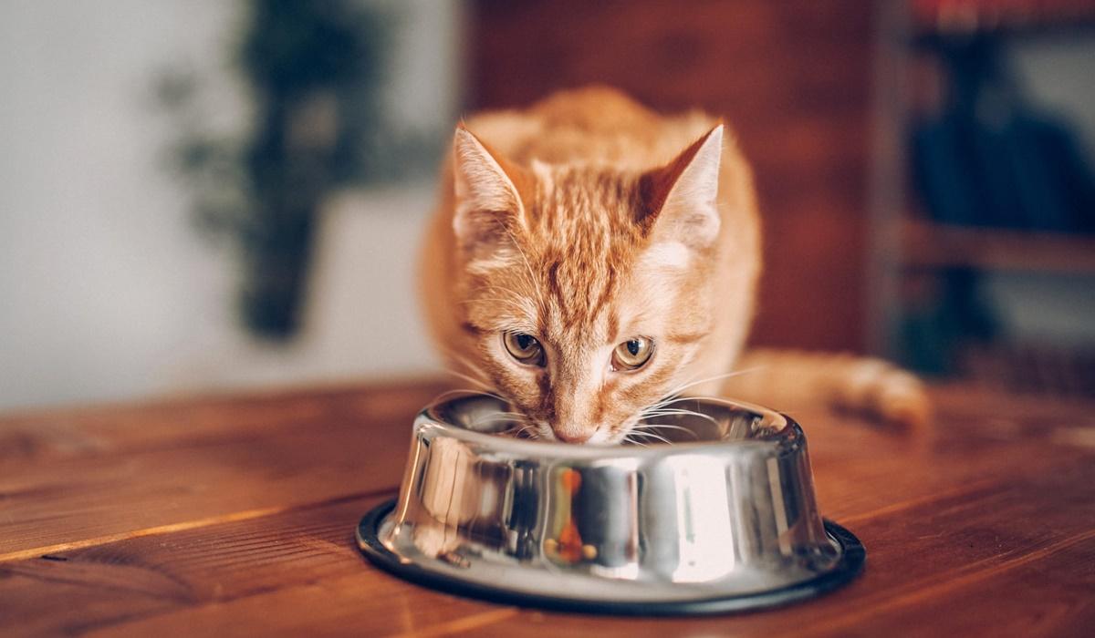 gatto che beve l'acqua
