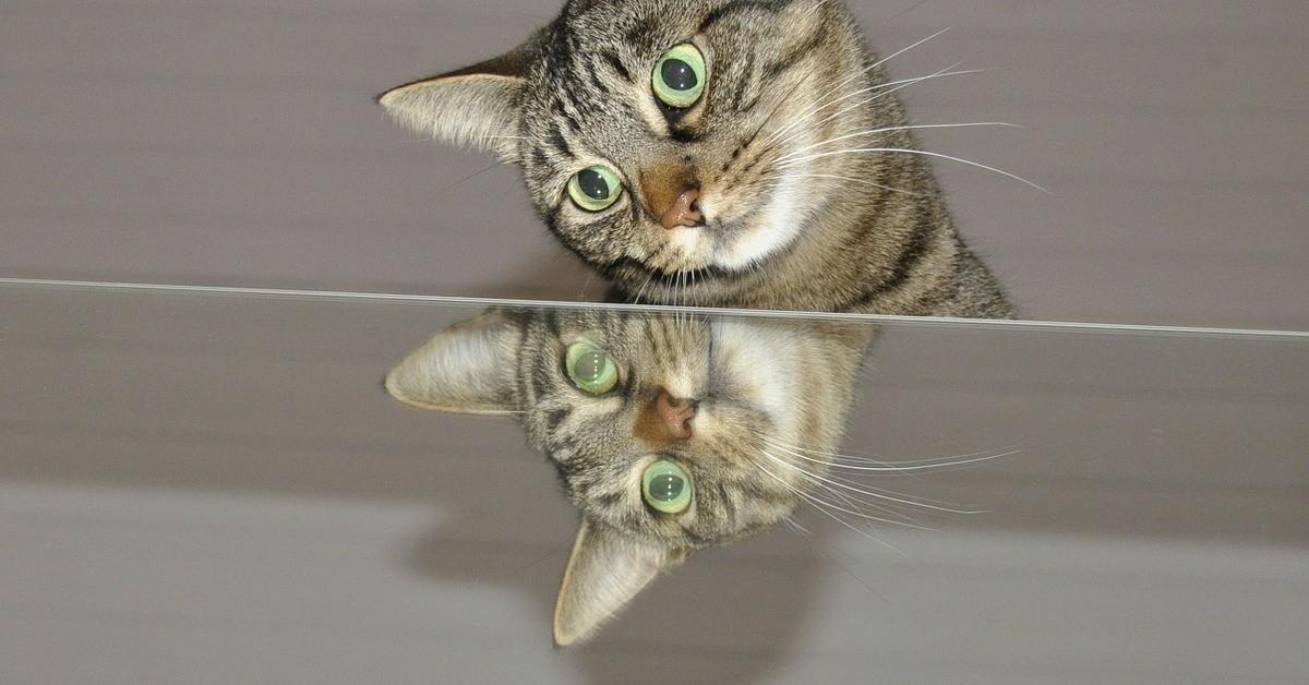 cosa vedono i gatti quando si guardano allo specchio