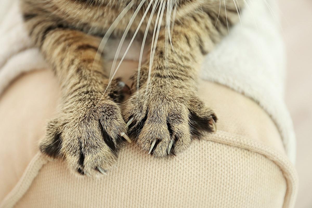 zampe di gatto in primo piano
