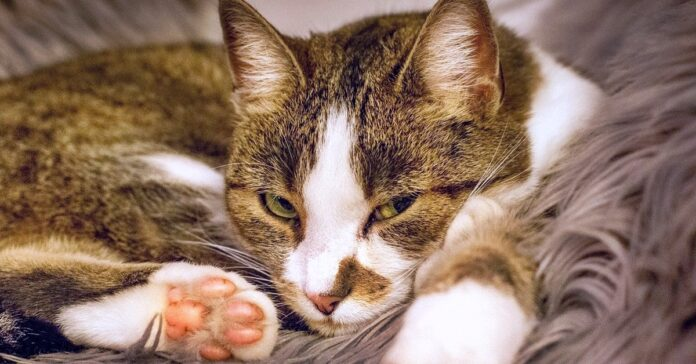 gatto che dorme su una coperta morbida
