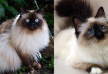 gatti a confronti