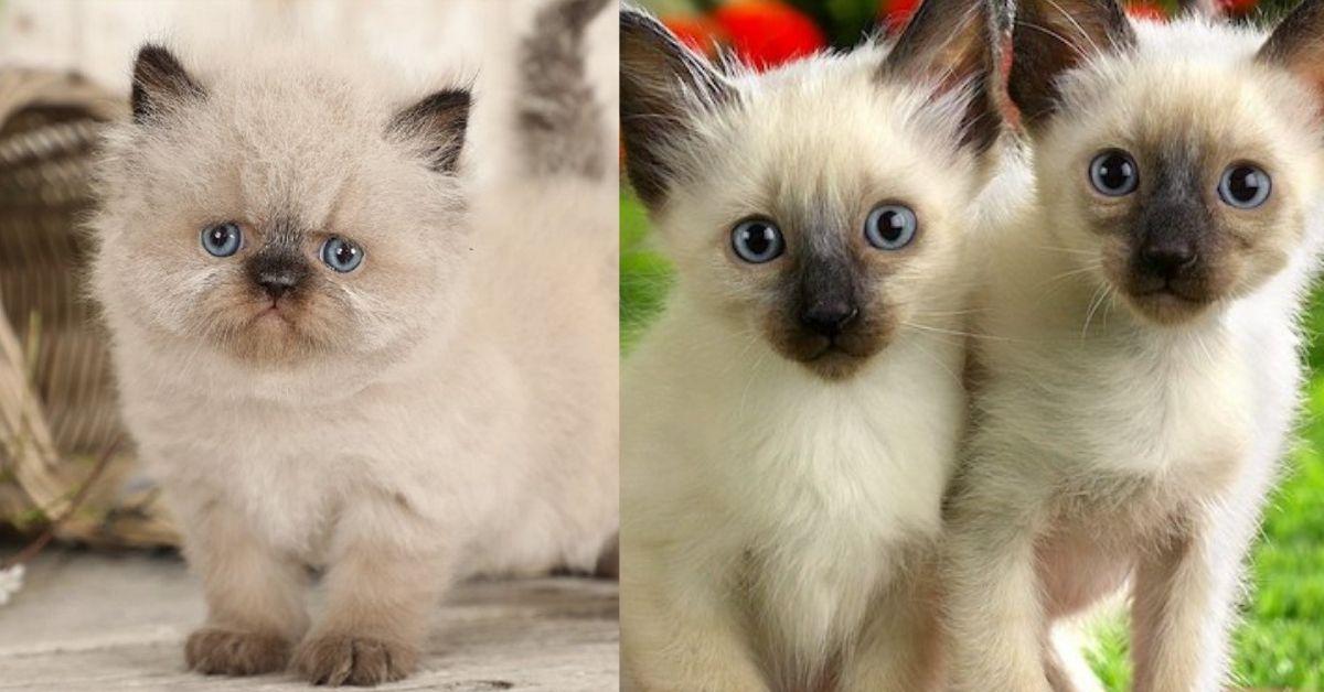 gattini a confronto