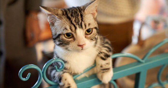 gatto arrampicato