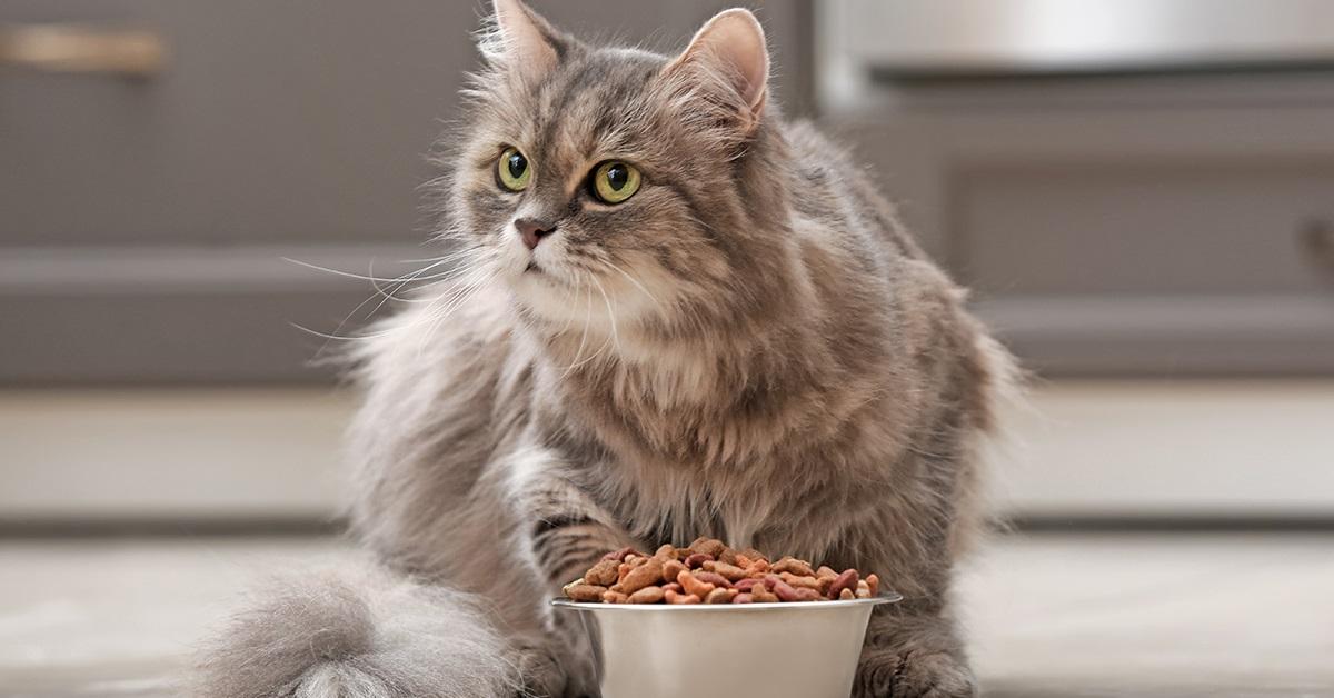 come convincere il gatto a mangiare