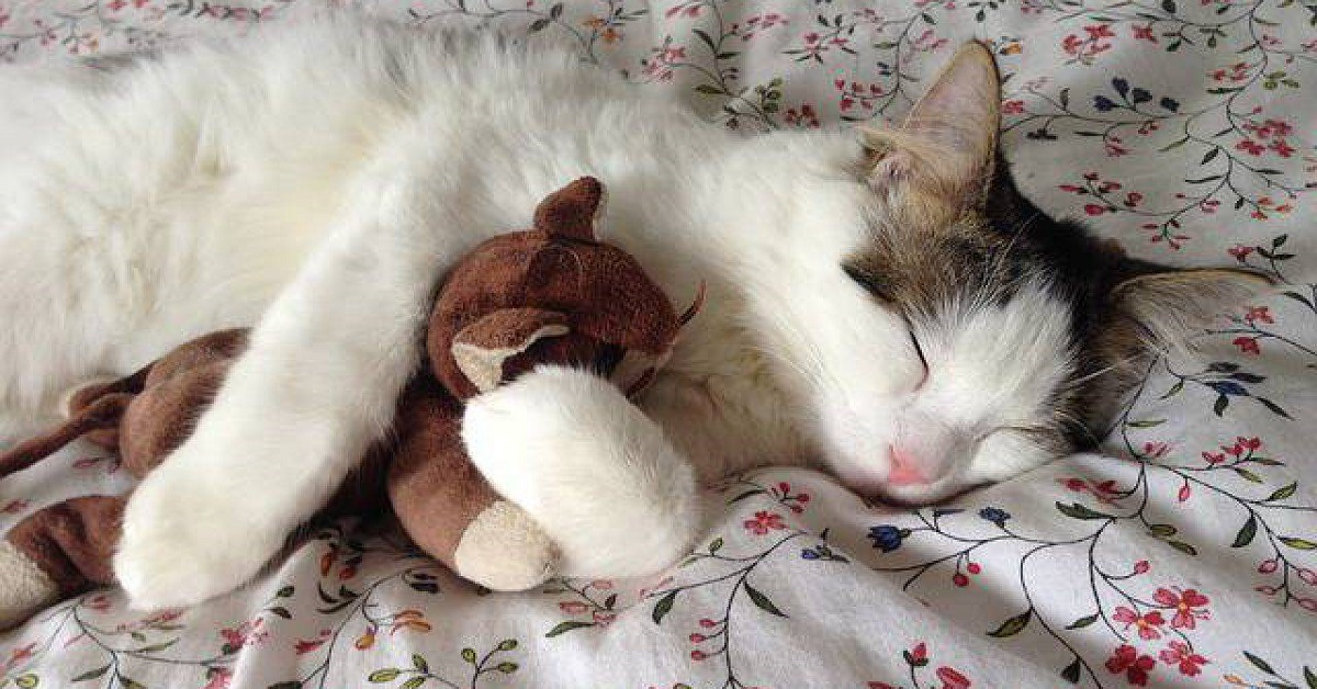 gatto con peluche