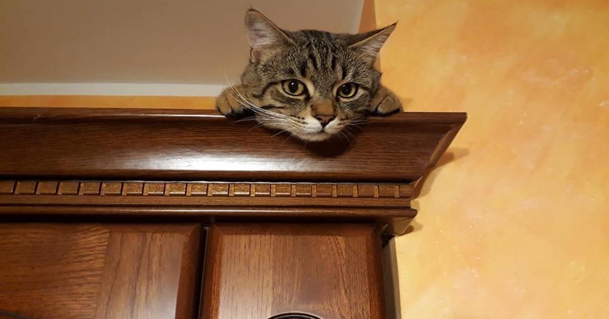 gatto sopra armadio