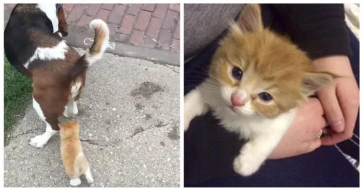 gattino segue un passante con cane