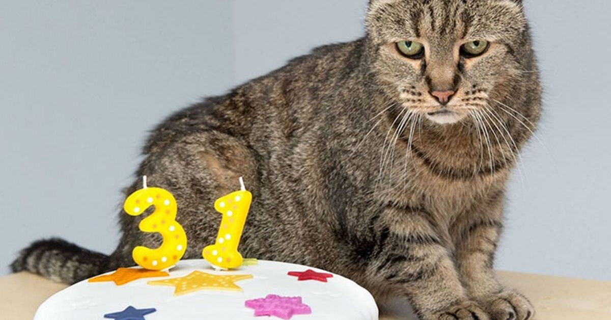 gatto davanti a torta di compleanno