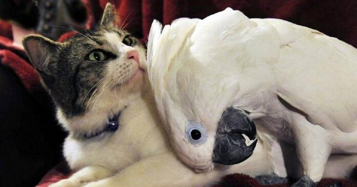 gattini accolgono gruppo simpatico pappagallo video notiamo volatile nuova realtà