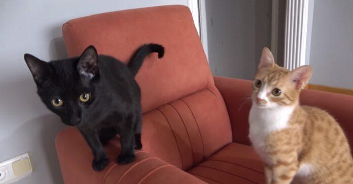 gattini indy e chewie diventano migliori amici tutto nasce confusione