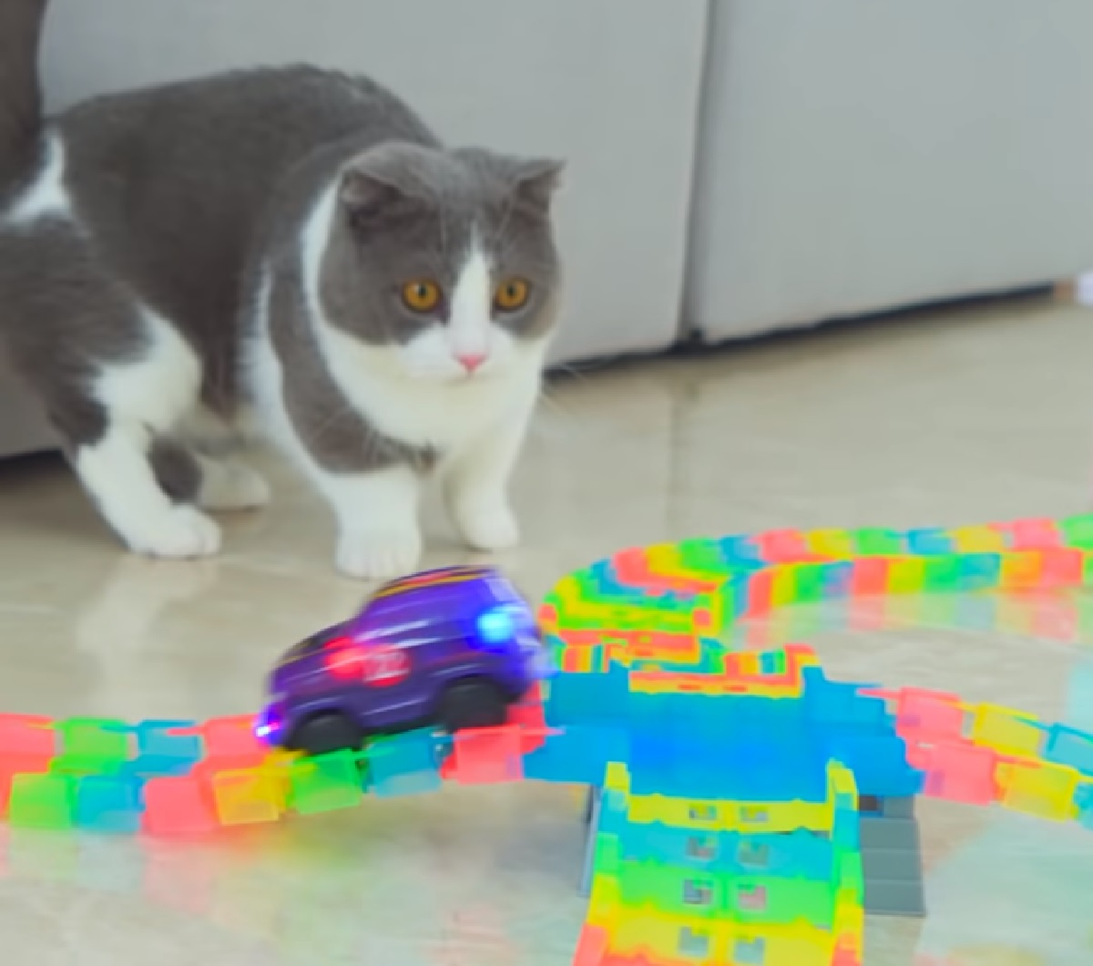 coco gattina osserva macchina