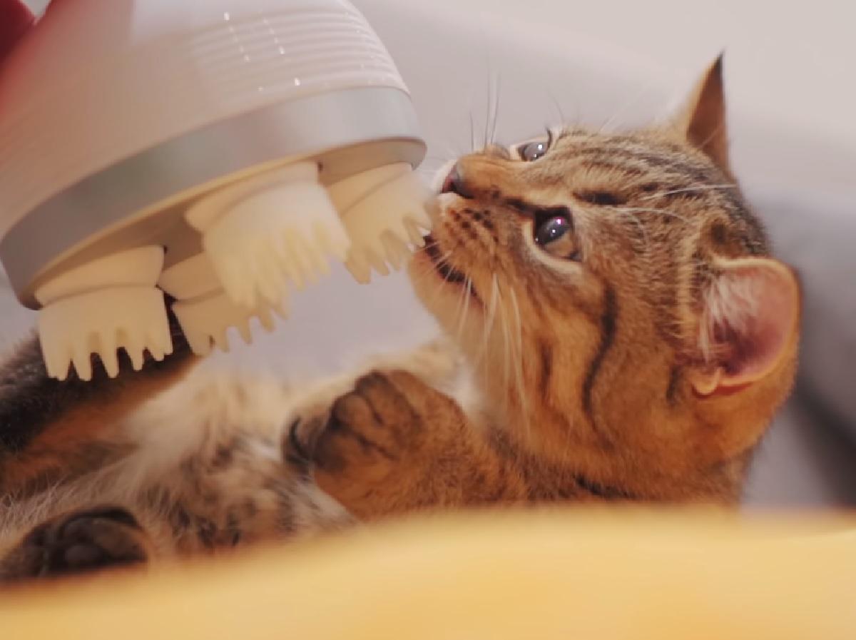 gattini vanno pazzi per massaggio