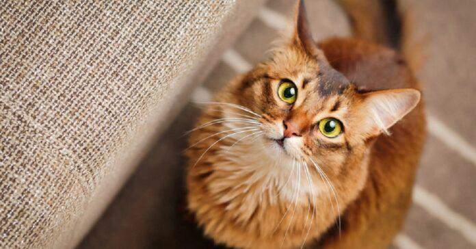 gattino cerca di rubare trucchi mamma registra video esilarante